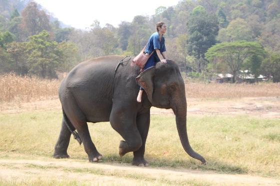 http://www.eattheglobe.com/post-upload/Elephants8.jpg